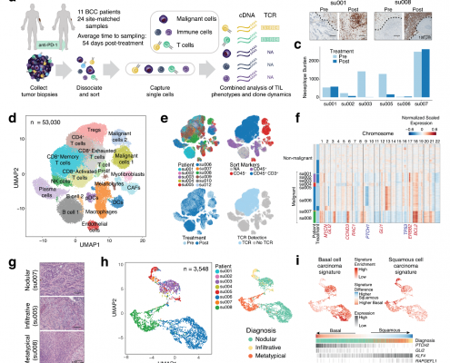 Clonal tcell expansion